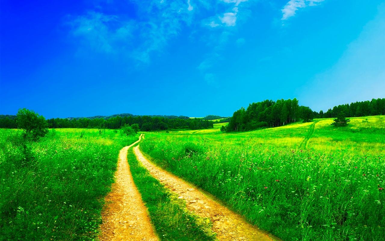 LandsvägGräs